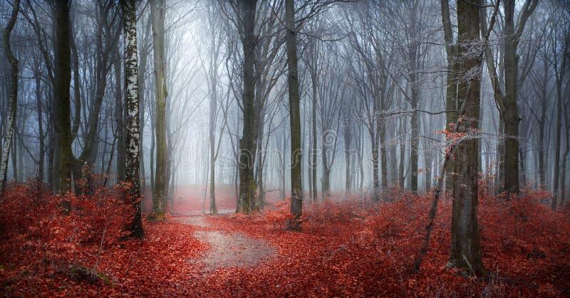 Mysteriöser nebeliger Wald mit einem Märchenblick stockbild