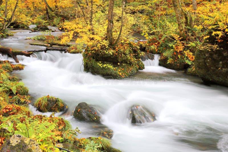 Mysteriöser Oirase-Strom, der den Herbstwald in Nationalpark Towada Hachimantai in Aomori durchfließt stockfoto
