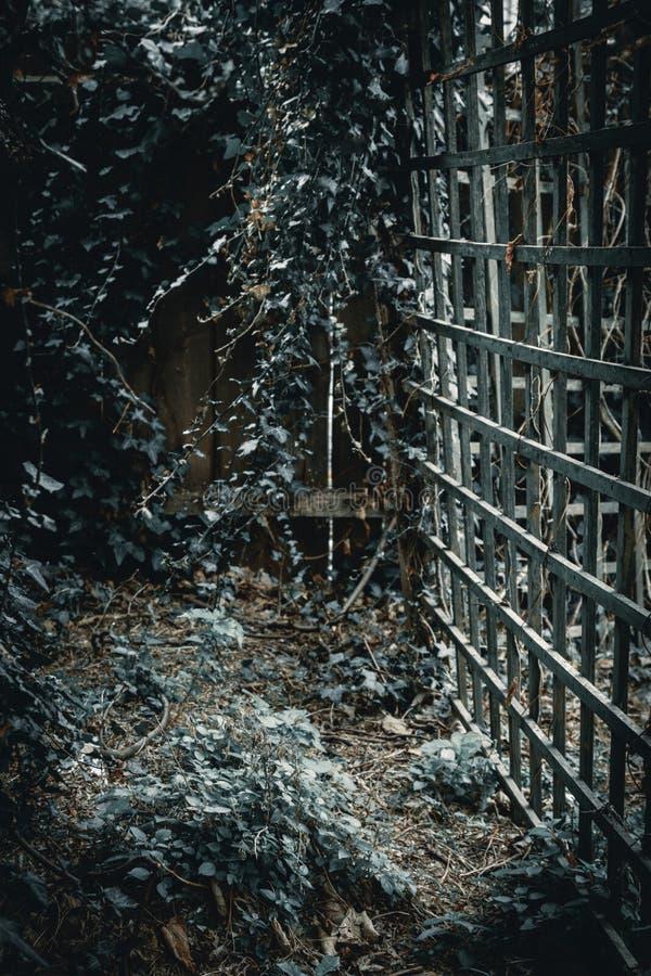 Mysteriöses dunkles Gitter und Efeu lizenzfreies stockfoto