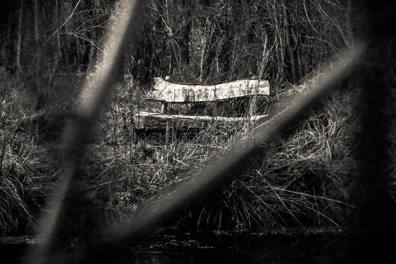 Lone bench in a creepy forest. Mysterious bench in a creepy forest royalty free stock photos