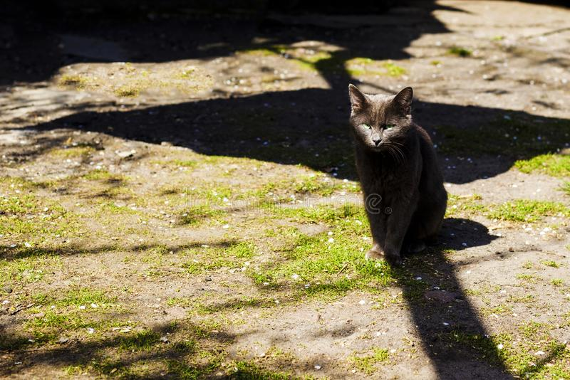 Mysterious black cat in the shadows ominously looks stock photos