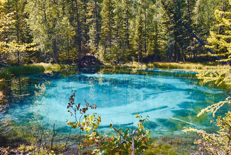 Blue geyser lake surrounded by forests in the Altai Mountain, Russia royalty free stock photos