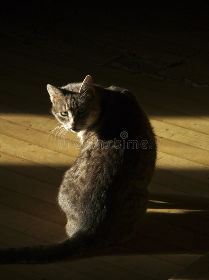 Download Mysterious cat stock image. Image of wood, shadow, animal - 1569727