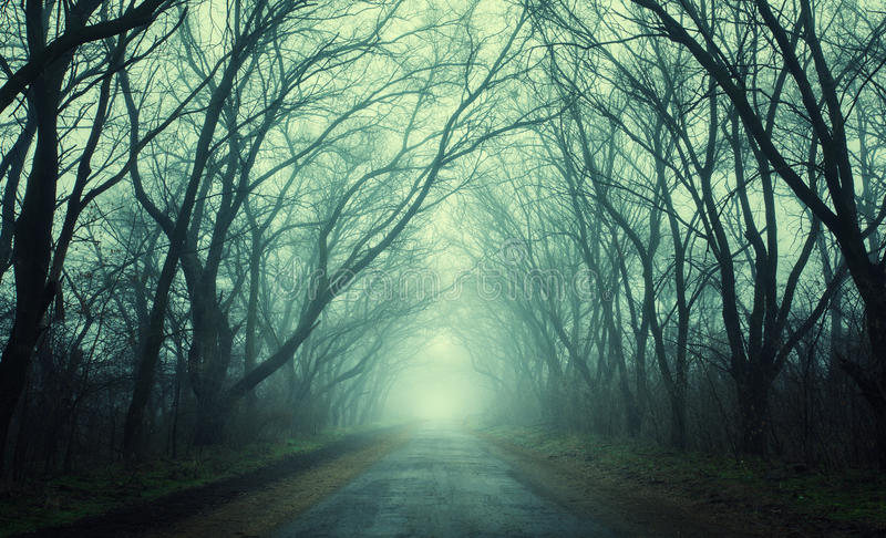 Mysterious dark autumn forest in green fog with road, trees stock image
