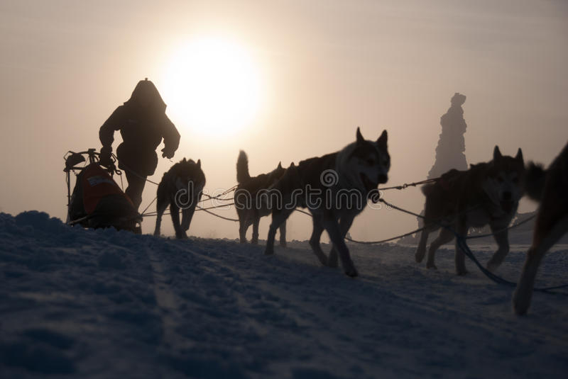 Download Mysterious dog sled editorial stock photo. Image of outdoors - 26283478