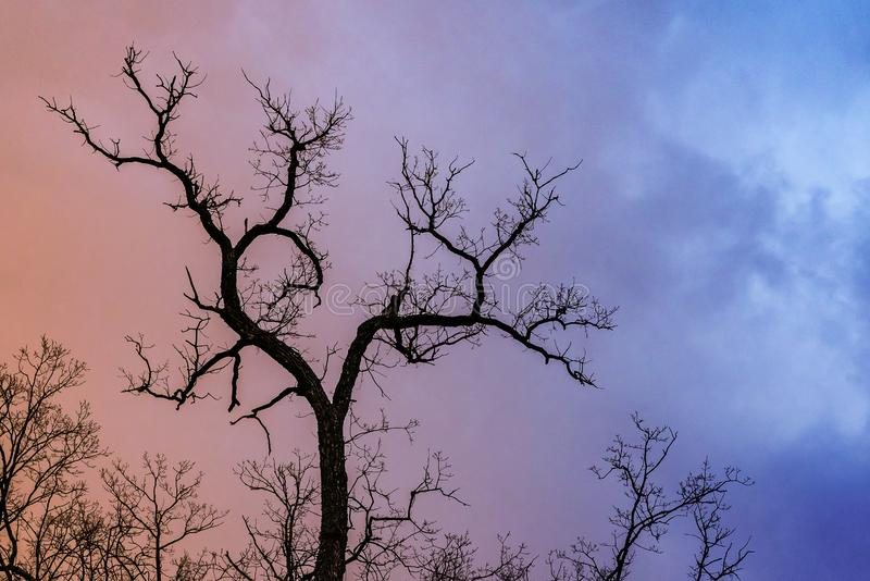 Mysterious dramatic landscape in cold tones - silhouettes of the bare tree branches against color toned cloudy sky royalty free stock photos