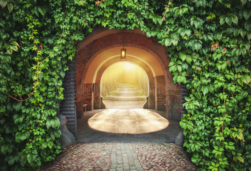Mysterious entrance. New life or beginning concept royalty free stock images
