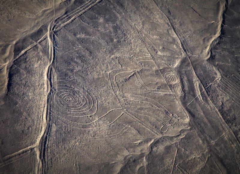 Mysterious figures Nazca desert from the aircraft. Peru stock photos