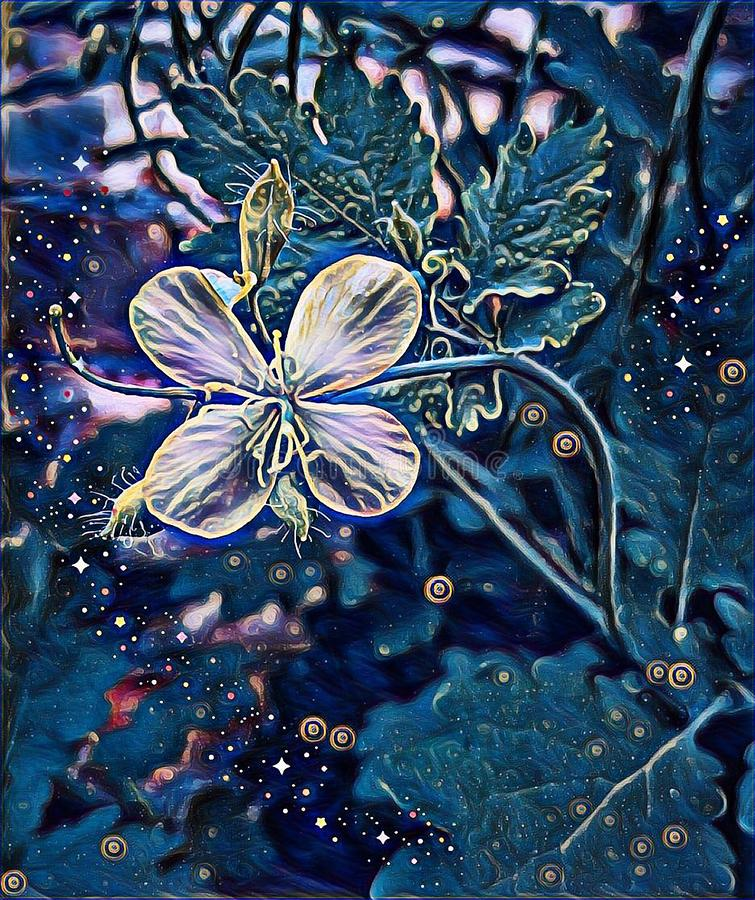 Mysterious flower in the light of the night. And the stars fly to meet him stock illustration