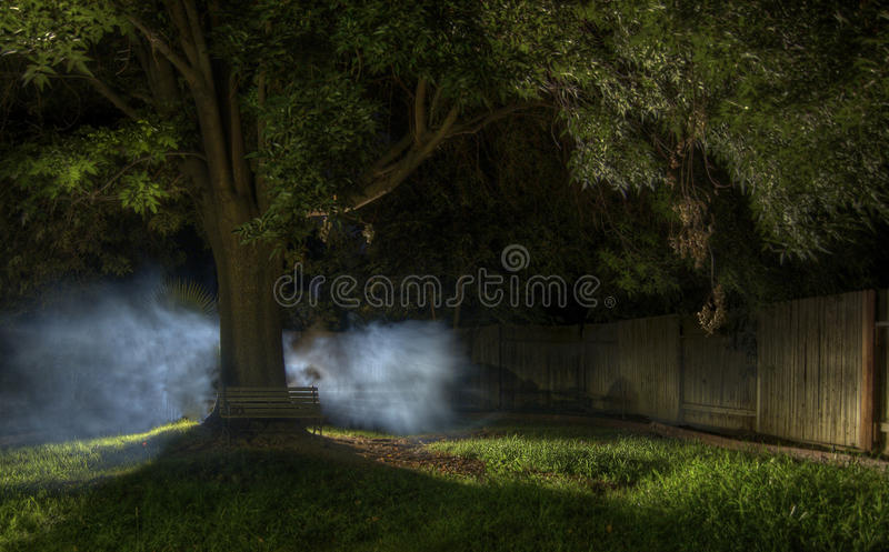Mysterious Fog. A mysterious fog spreads from behind a tree stock photography