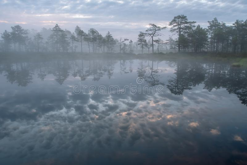 Mysterious bog and foggy sunrise width fabulous colored reflection of the  rising sun on the bog lake  - summer morning in Estonia royalty free stock photography