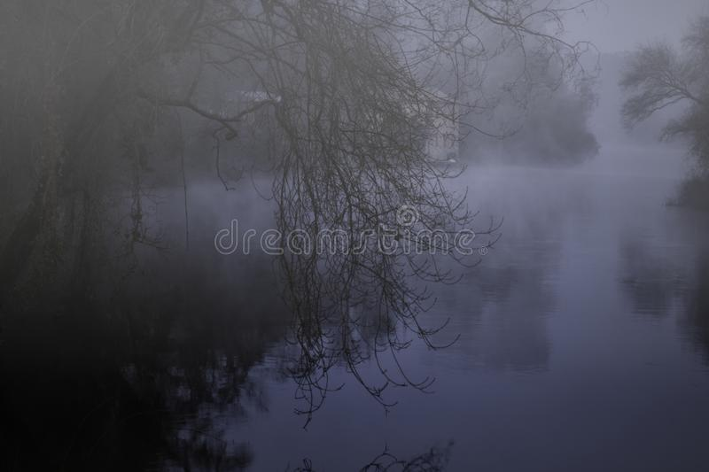 Foggy forest river at night stock image