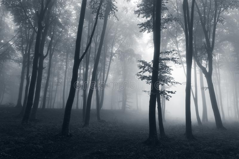 Creepy dark trees silhouettes in strange foggy forest royalty free stock photo