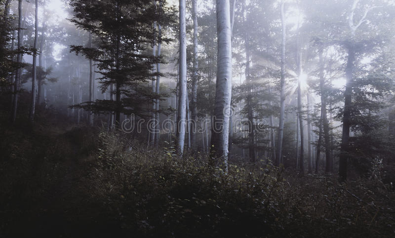 Mysterious Forest Free Public Domain Cc0 Image