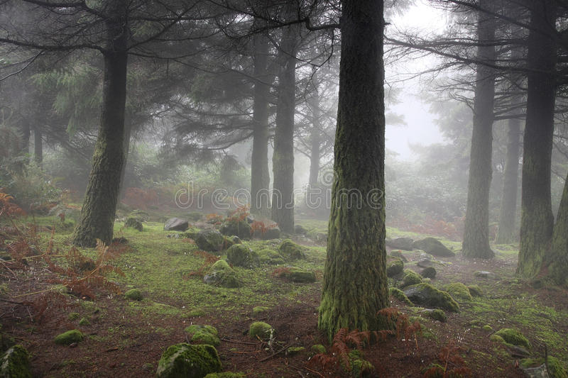 Mysterious forest, elfs and hobbit home