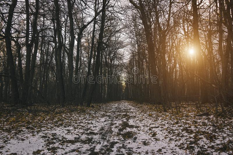 Mysterious forest at the evening after first snow. Magic winter landscape. stock photos