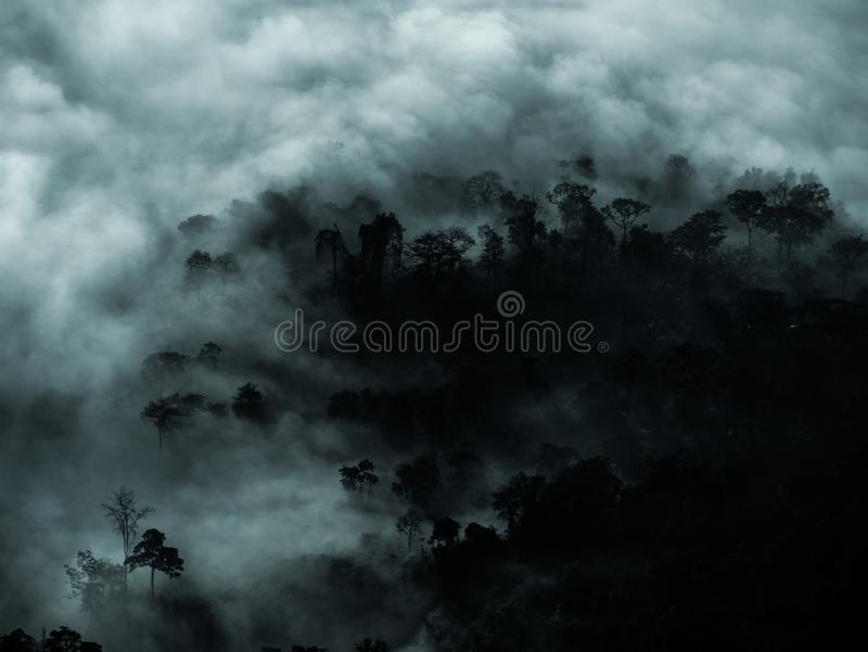 Mysterious forest with fog and dark tree area for copy space.  royalty free stock image