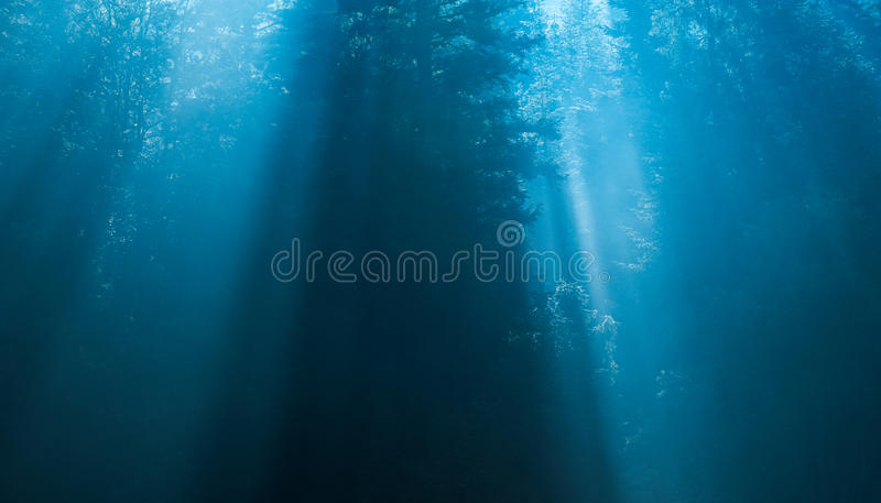 Mysterious forest in the fog royalty free stock photo