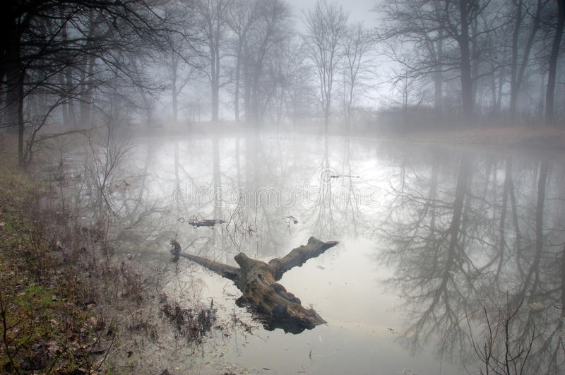 Mysterious forest at foggy morning royalty free stock images
