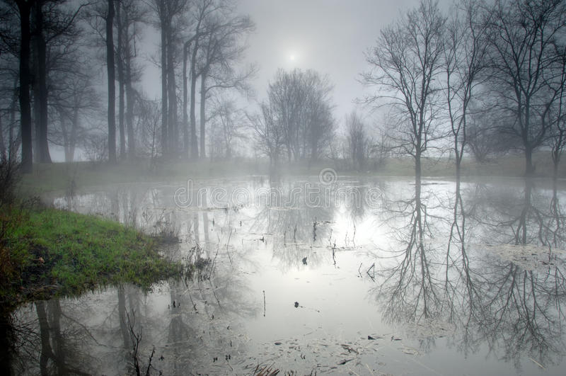 Download Mysterious Forest At Foggy Morning Stock Image - Image: 13831399