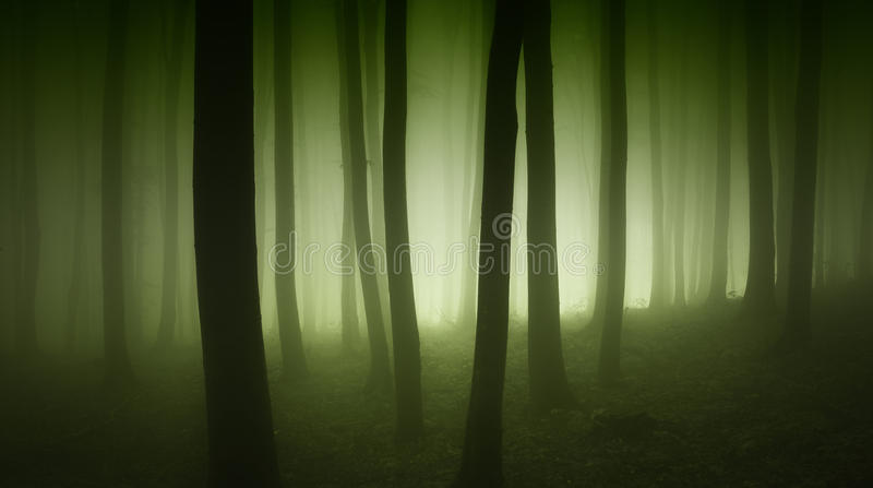 Mysterious forest with green fog trough trees stock image