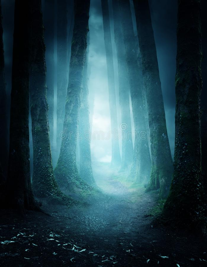 Mysterious Forest Pathway stock photography