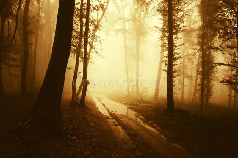 Mysterious forest road royalty free stock image