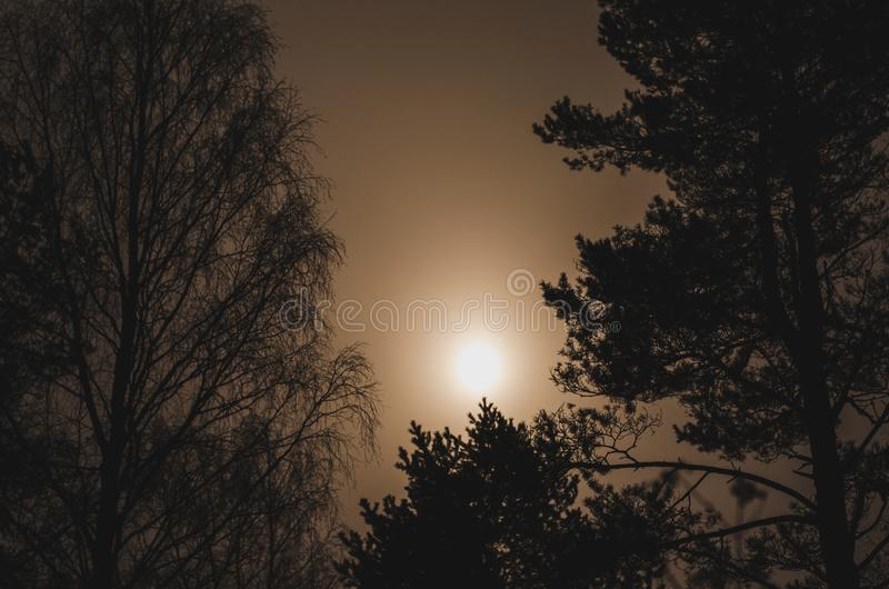 Mysterious full moon in fog against dark branches of pines and birch trees royalty free stock photography