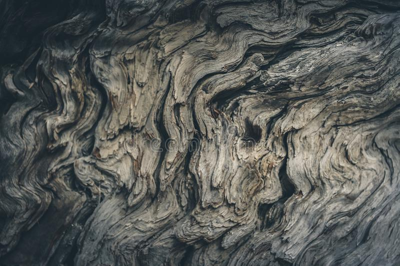 Mysterious grunge toned gray woody background with soft focus of old weathered wood. stock photo