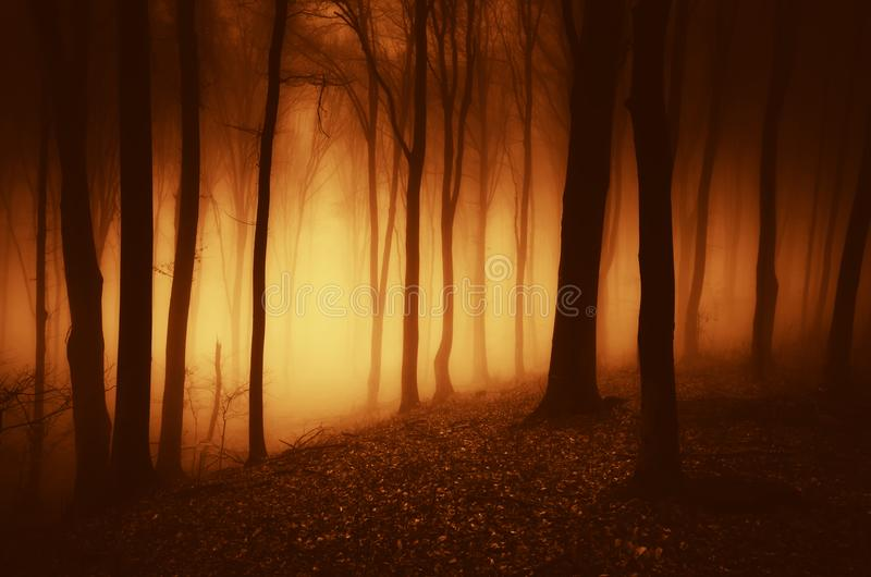 Mysterious haunted forest at night with strange light royalty free stock image