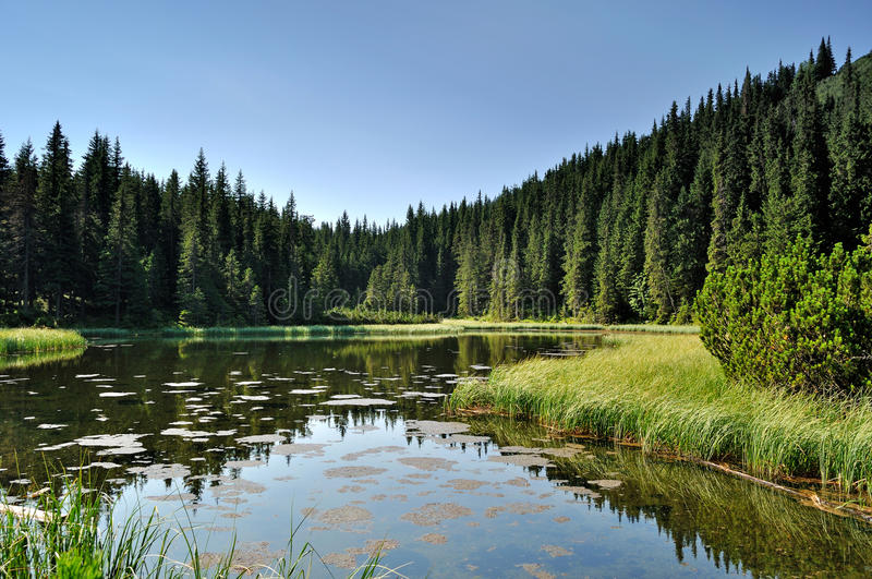 Mysterious lake among fir trees stock photography