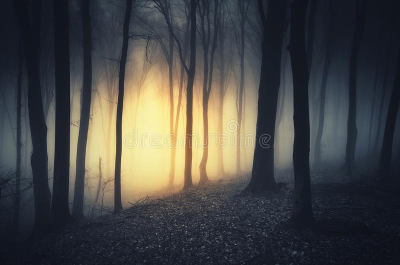 Mysterious light in dark haunted forest at night stock photos