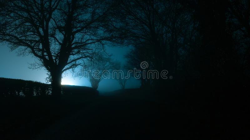 A mysterious moody, scary lane,  Trees silhouetted against a light on a foggy atmospheric winters night. A mysterious moody, scary lane, Trees silhouetted royalty free stock photography