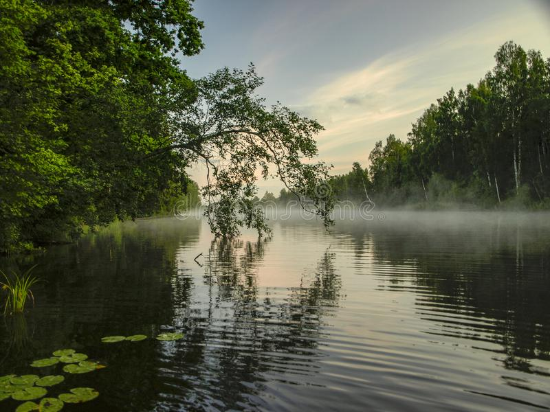 A mysterious morning on the lake, water like a mirror, white mist,. Lovely reflections, latvia stock photos