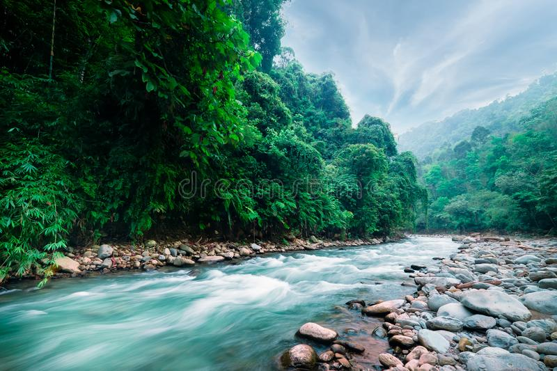 Mysterious mountainous jungle of North Sumatra, Indonesia. Mysterious mountainous jungle with trees leaning over fast stream with rapids. Magical scenery of royalty free stock photos