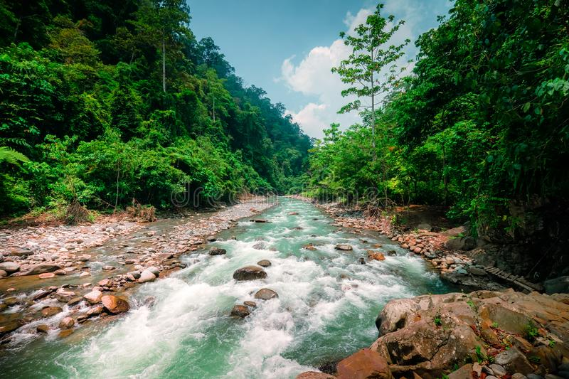 Magical scenery of rainforest and river. North Sumatra, Indonesia. Mysterious mountainous jungle with trees leaning over fast stream with rapids. Magical stock photos