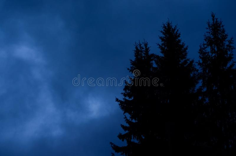 Mysterious nocturnal night cloudy sky against mystery silhouettes of fir trees stock image