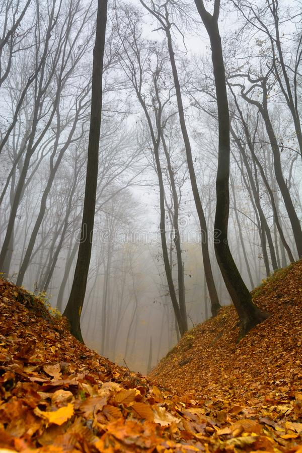 A mysterious and quiet day in the forest with fog. Autumn weather, damp and low temperature. Fairy or horror wallpaper. stock photography