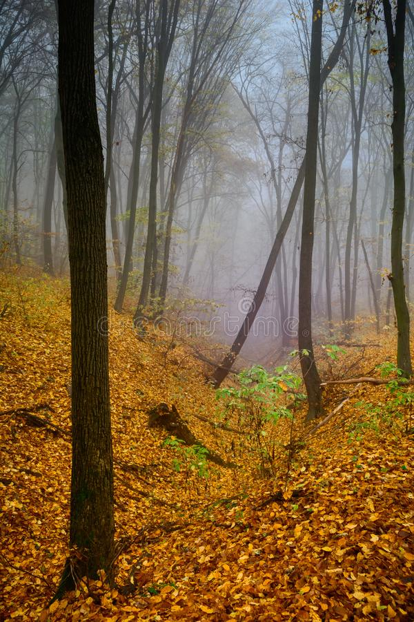 A mysterious and quiet day in the forest with fog. Autumn weather, damp and low temperature. Fairy or horror wallpaper. stock image