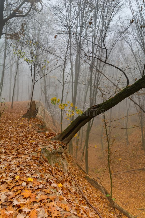 A mysterious and quiet day in the forest with fog. Autumn weather, damp and low temperature. Fairy or horror wallpaper. stock photo