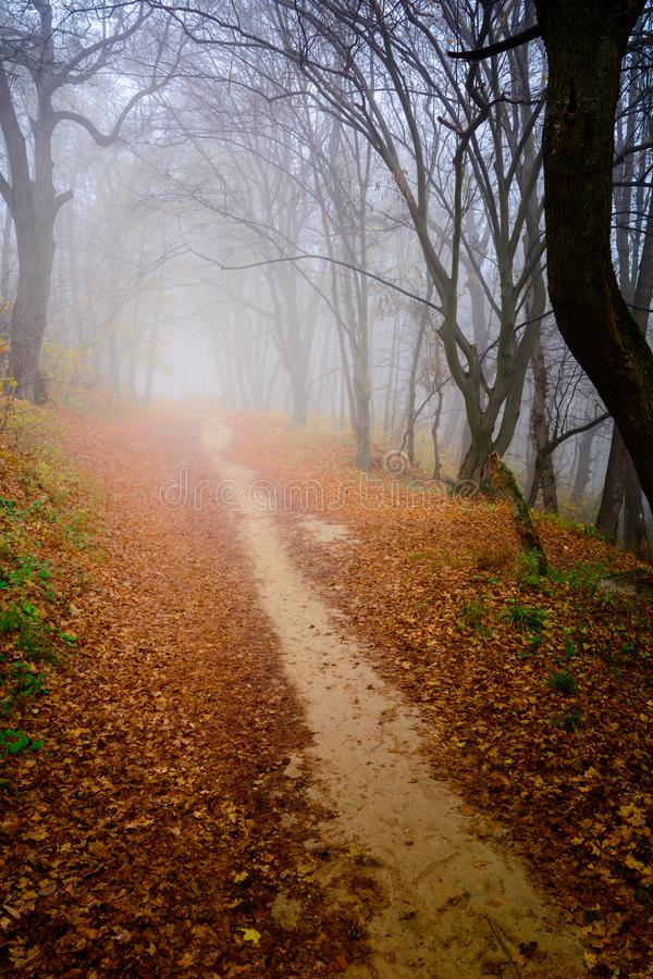 A mysterious and quiet day in the forest with fog. Autumn weather, damp and low temperature. Fairy or horror wallpaper. royalty free stock photos