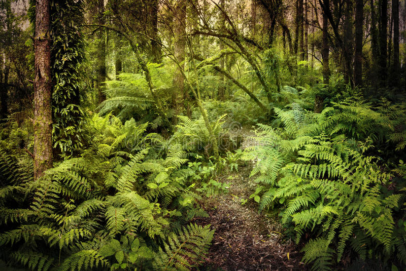 Download Mysterious Rainforest stock image. Image of greenery - 23407897