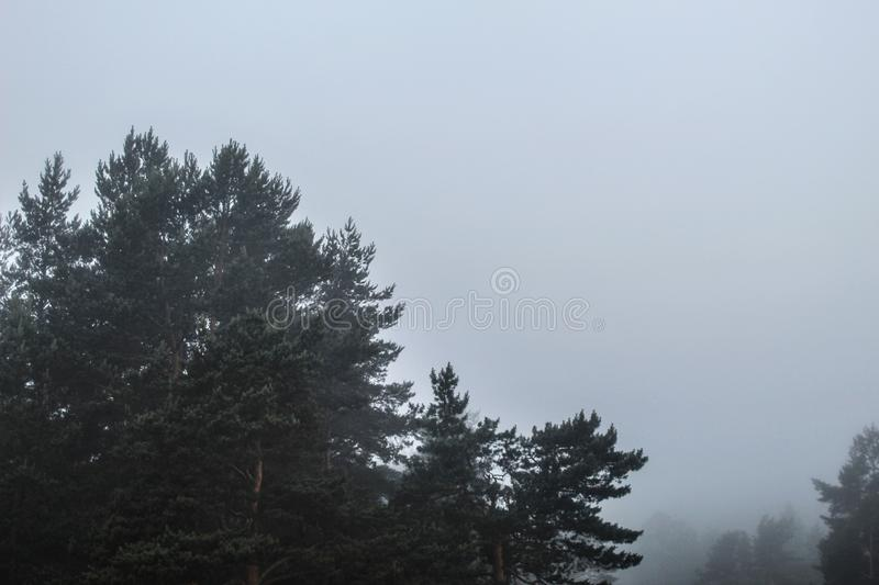 Mysterious Russian forest and thick fog royalty free stock images