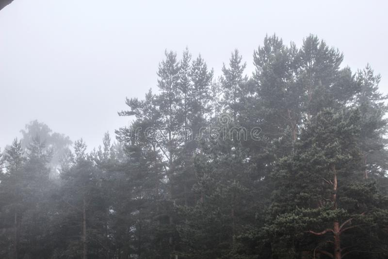 Mysterious Russian forest and thick fog royalty free stock photo
