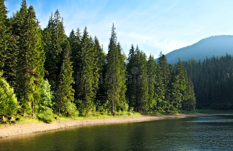 Mysterious Sinevir lake among fir trees. royalty free stock images