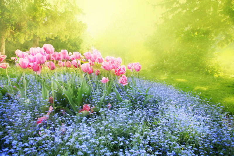 Mysterious sunny garden. Spring sunny mysterious garden with tender flower-bed royalty free stock photography