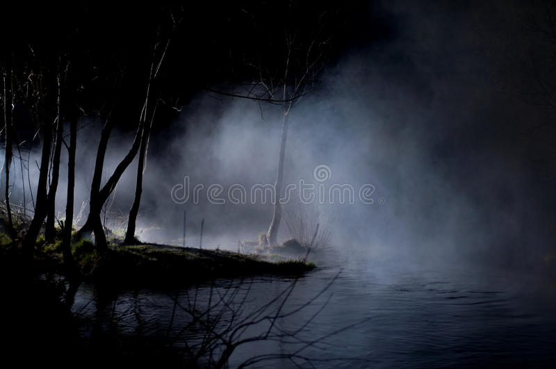 Download Mysterious Trees In A Haunted Forest Stock Photo - Image: 11593712