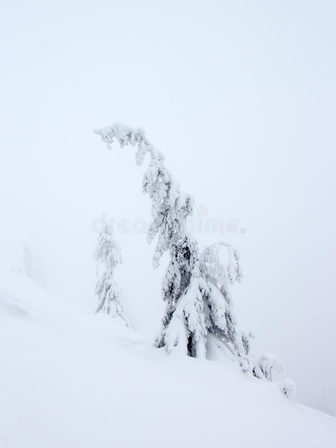 Mysterious tress on foggy winter mountains stock photography
