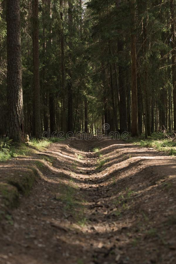 A mysterious way in the summer dense magical forest royalty free stock photos