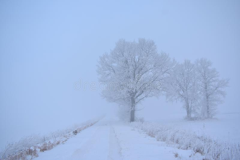 Mysterious white winter road.Foggy day Lithuania royalty free stock photos